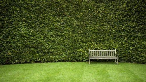 Für mehr Privatsphäre im Garten: Welche Pflanzen Sie in den nächsten Tagen dringend aussäen sollten