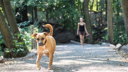 Viele reagieren falsch: Wer Angst vor Hunden hat, sollte diese Verhaltenstipps kennen
