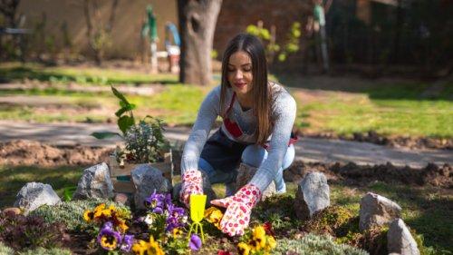 Gartenprofi klärt auf: Abfallprodukt aus der Küche lässt Ihre Pflanzen in die Höhe schießen
