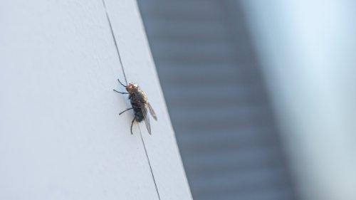 Kein Summen und keine Flecken mehr: Diese Fliegenklatsche ist effizient und einfach zu bedienen