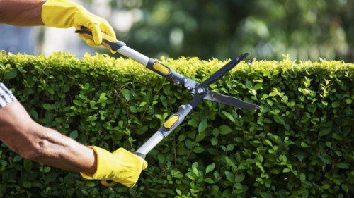 Bis zu 100.000 Euro Strafe: Welche Gartenarbeit von März bis Oktober tatsächlich verboten ist