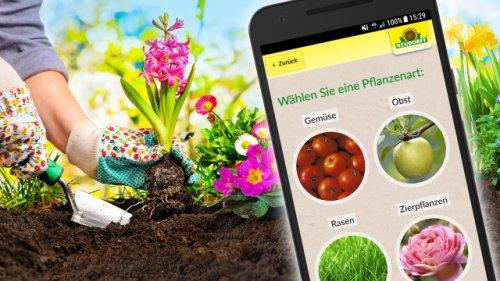 Die besten Garten-Apps kostenlos zum Download: So werden Sie zum Pflanzen-Experten