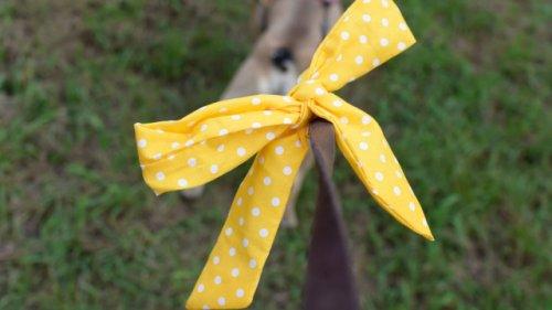 Hundebesitzer, aufgepasst: Das bedeutet eine gelbe Schleife an Halsband oder Leine