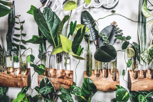 The Best House Plants for a Stylish—and Healthy—Home
