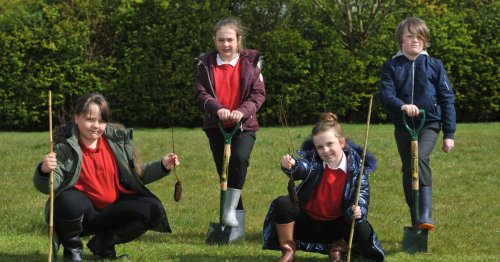 The County Durham pupils who've planted hundreds of trees to help their future