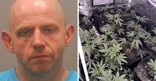 Cannabis farmer turned his living room into drugs factory