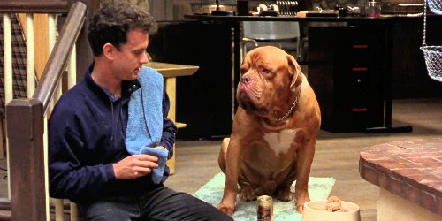 Turner And Hooch: Premiere Date, Cast And Other Quick Things We Know About The Disney+ Series