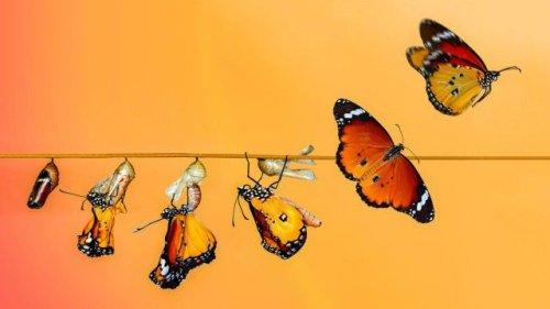 IT-Organisation neu ausrichten: 5 Aufgaben für IT-Transformation