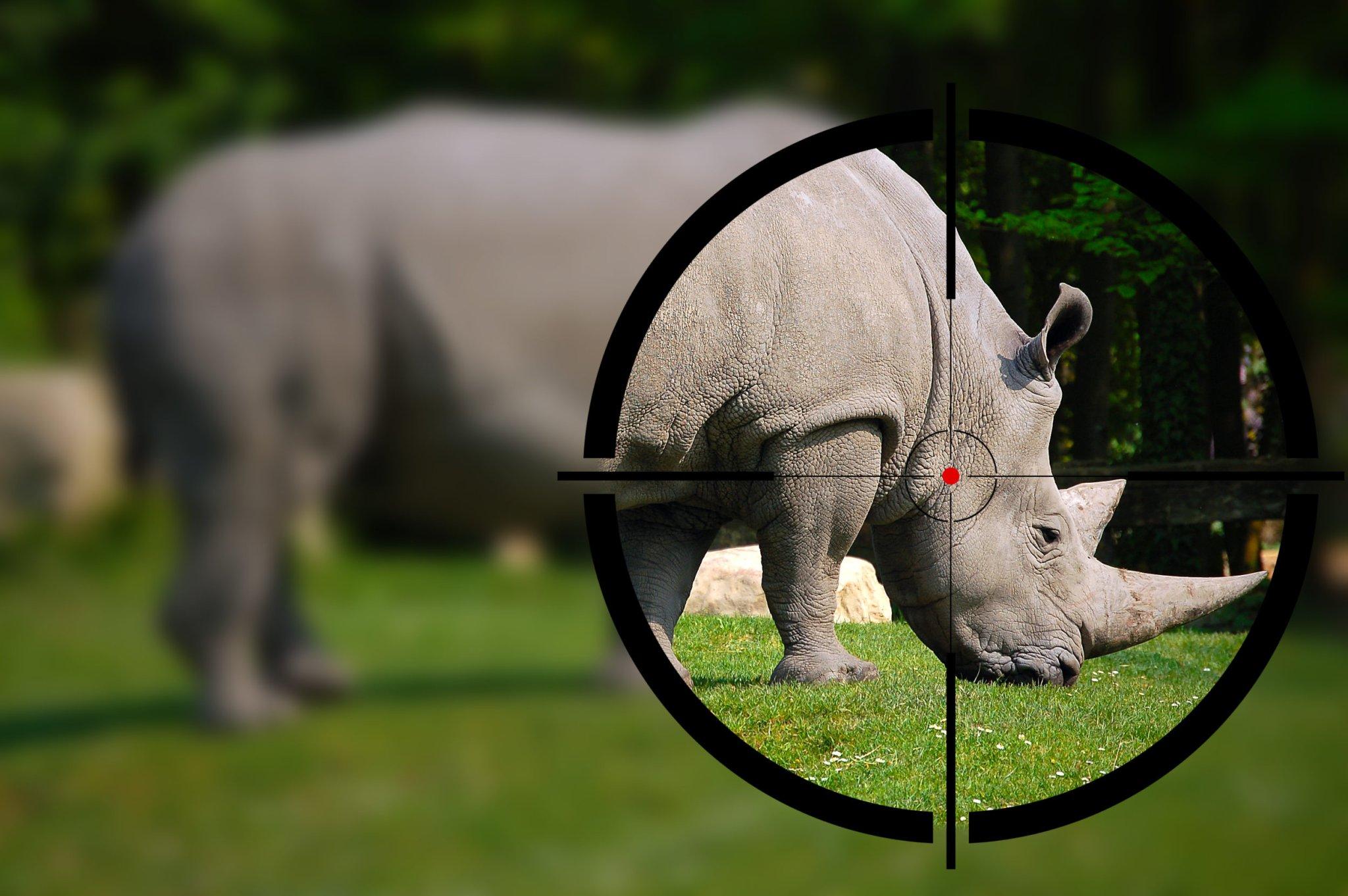 Hefty sentence handed down for Kruger National Park poaching
