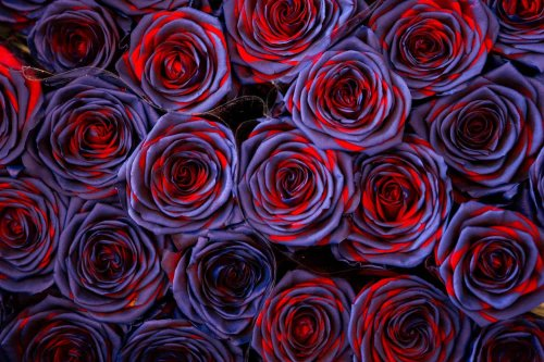 Love is a bed of roses