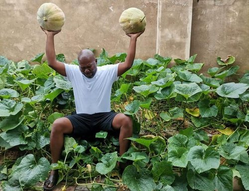 City of Tshwane accuses 'Cabbage bandit' of profiting from a 'land grab'