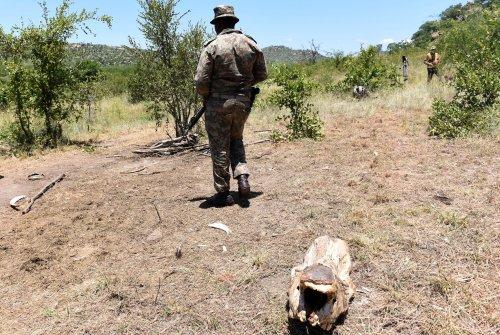 SANParks explains decision to rotate anti-poaching rangers   The Citizen