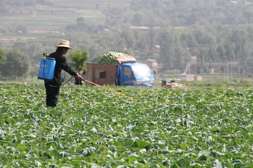 A Pesticide Linked to Brain Damage in Children Could Finally Be Banned