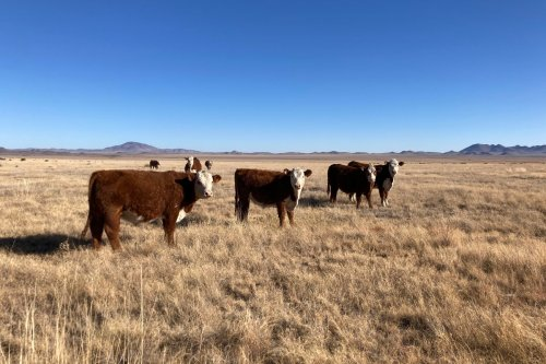 As the West Faces a Drought Emergency, Some Ranchers are Restoring Grasslands to Build Water Reserves