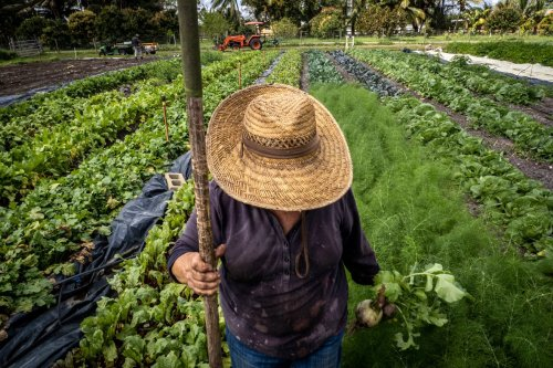 To Simplify or Diversify? On Today's Farms, That Is the Question.