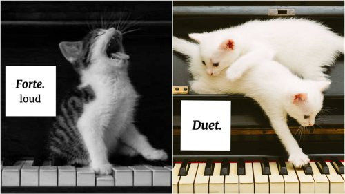 13 cats who will accurately teach you musical terminology
