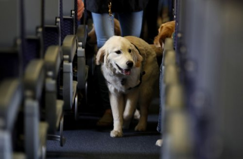 House adopts veterans' service dog measure from retiring Rep. Steve Stivers of Ohio