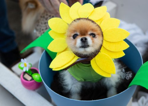 See adorable dogs at 14th annual Spooky Pooch Parade in Lakewood (Photos)