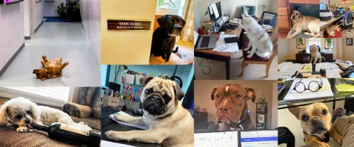 See the 20 Cutest Canine co-worker finalists; Vote for your favorite (photos, poll)
