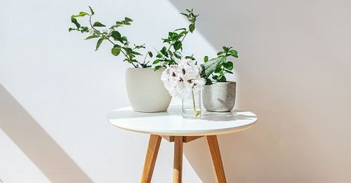 The Top 5 Indoor Plants for Clean Air That Are Better Than Pricey Purifiers, TBH