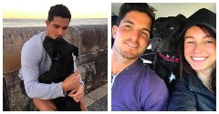 Discover rescue dogs