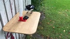 Discover bird feeder