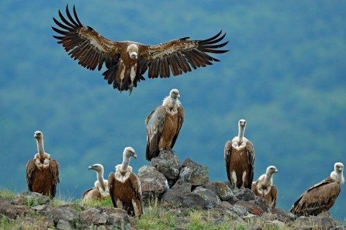 Vultur: Android-Trojaner späht Login-Daten für Bankkonten und E-Wallets aus