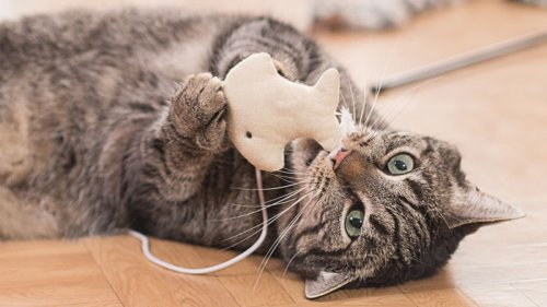 20 cat toys with thousands of positive reviews