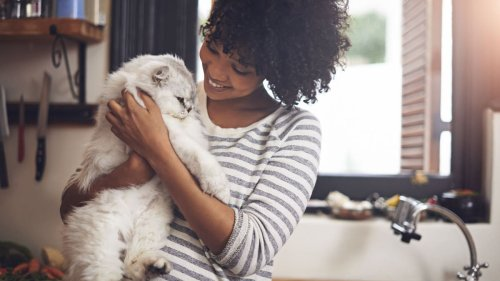 11 things you need to buy if your cat is extra