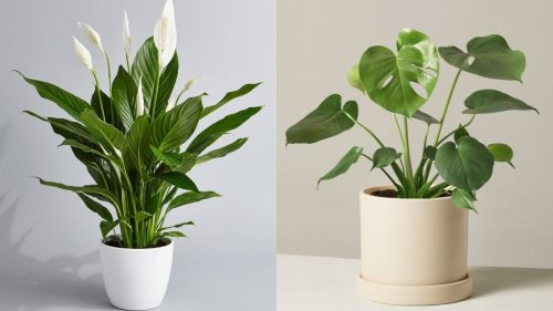 10 gorgeous plants to brighten up your living space