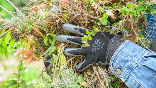 The Best Gardening Gloves of 2021
