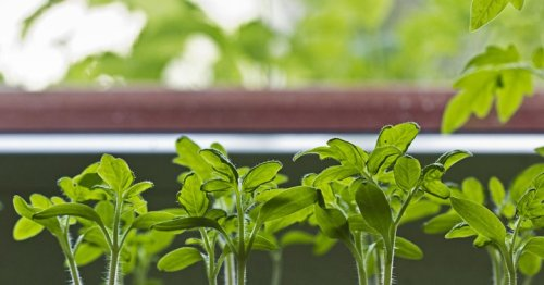 How To Grow Tomatoes At Home — No Matter How Much Space You Have