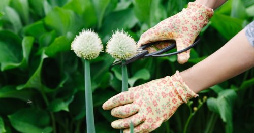 How To Pinch Back Flowers & Why You Should Save Your Cuttings