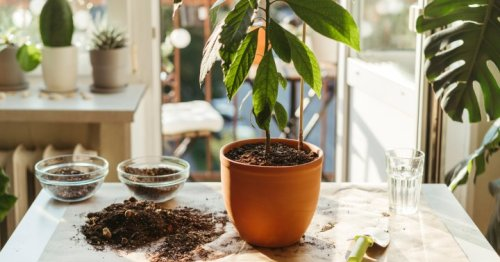 How To Revive Houseplants: An Expert Shares 8 Quick Fixes