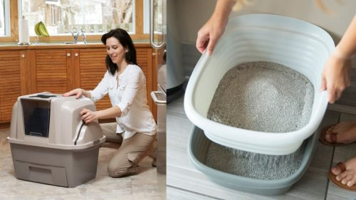 10 litter boxes that make kitty cleanup easier
