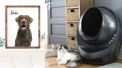 14 gifts you should buy yourself for National Pet Day