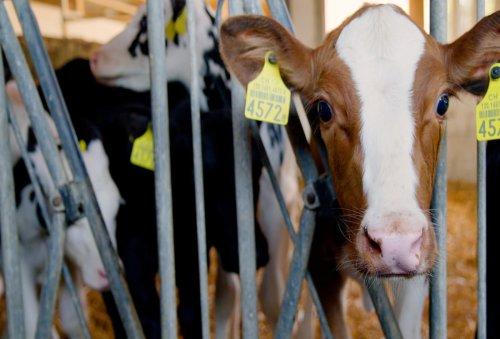 If Nestlé wants to reach net zero, farming has to change