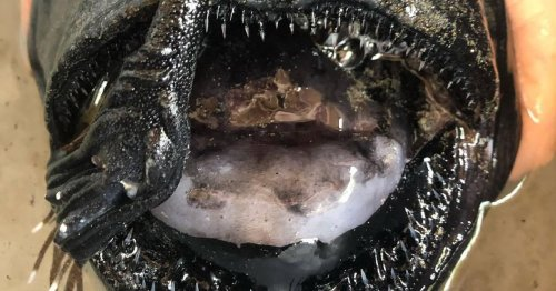 Strange fish with teeth 'like pointed shards of glass' washes up on shore