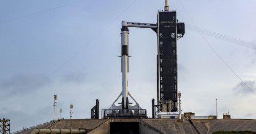 SpaceX successfully launches squid and tardigrades to ISS for NASA