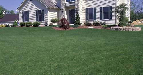 Lawn care 101: Essentials to keeping your lawn healthy and beautiful