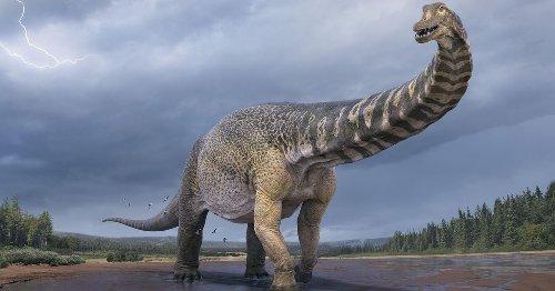 Meet Australotitan, the biggest dinosaur to ever stomp across ancient Australia