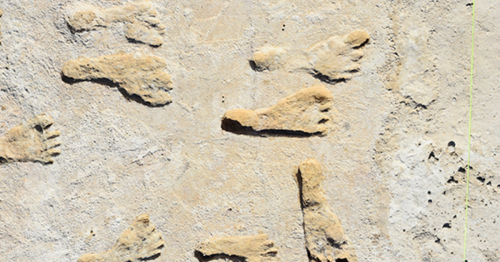 Oldest fossil footprints in North America are teaching us about early humans