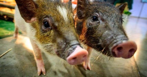 Scientists say mammals can breathe through their butts in emergencies