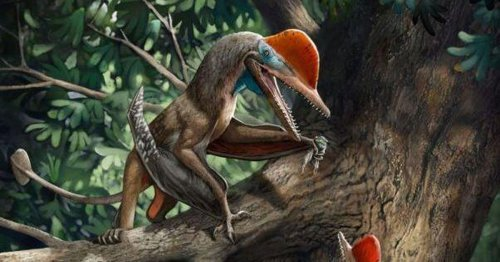 Scientists find ancient flying 'Monkeydactyl' with oldest opposed thumb