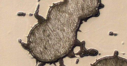 NASA spacecraft spots Mr. Peanut lookalike on Mars surface