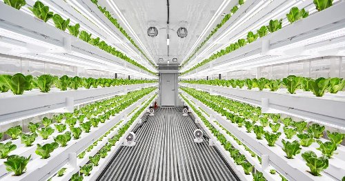 The future of vertical farming is hiding in this shipping container - Video
