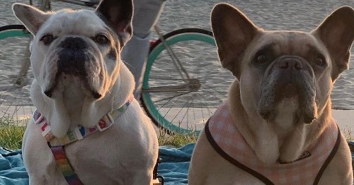 Lady Gaga dognapping: Five arrested, including woman who turned in dogs
