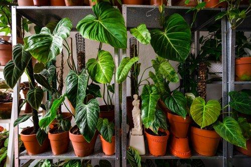 Ces 10 plantes purifiantes pour nos intérieurs