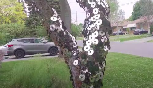 Illusion d'optique : un homme crée «un arbre invisible» et ralentit la circulation dans sa rue
