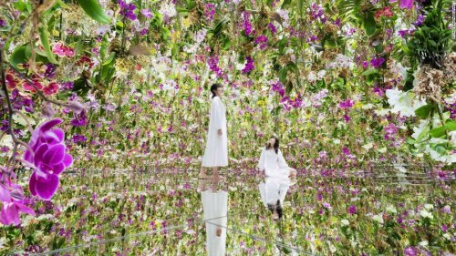 Alive with 13,000 'floating' orchids, this is a garden like no other